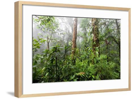 Monteverde Cloud Forest Reserve, Costa Rica-Susan Degginger-Framed Art Print