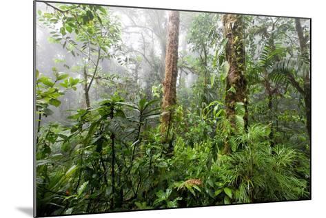 Monteverde Cloud Forest Reserve, Costa Rica-Susan Degginger-Mounted Photographic Print