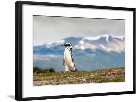 Magellanic Penguin with Mountainous Background-James White-Framed Art Print