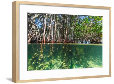 Over and under Shot of Mangrove Roots in Tampa Bay, Florida-James White-Framed Art Print