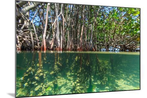 Over and under Shot of Mangrove Roots in Tampa Bay, Florida-James White-Mounted Photographic Print