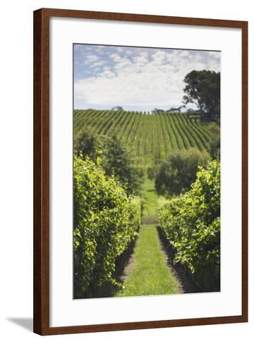 Australia, Adelaide Hills, Gumeracha, Vineyard-Walter Bibikow-Framed Art Print