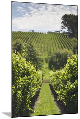 Australia, Adelaide Hills, Gumeracha, Vineyard-Walter Bibikow-Mounted Photographic Print