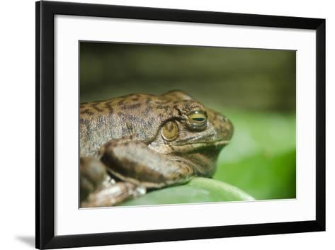 Australia, Sydney. Sydney Sea Life Aquarium. White Lipped Tree Frog-Cindy Miller Hopkins-Framed Art Print