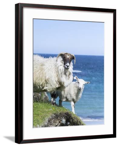 Scottish Blackface on the Isle of Harris, Scotland-Martin Zwick-Framed Art Print