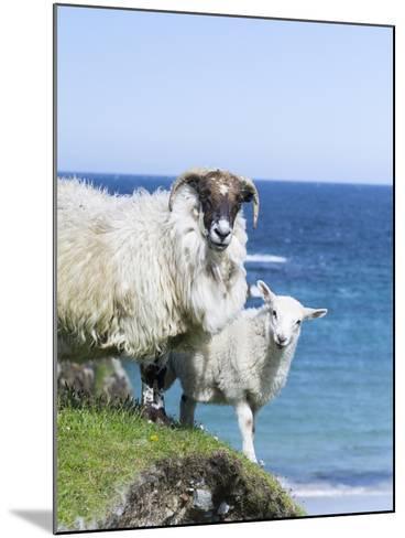 Scottish Blackface on the Isle of Harris, Scotland-Martin Zwick-Mounted Photographic Print