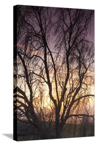 Australia, Murray River Valley, Sedan, Sunrise-Walter Bibikow-Stretched Canvas Print