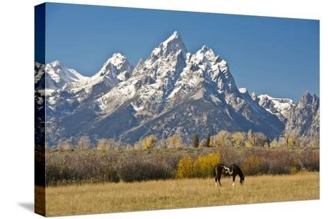 Horse and Grand Tetons, Moose Head Ranch, Grand Teton National Park, Wyoming, USA-Michel Hersen-Stretched Canvas Print