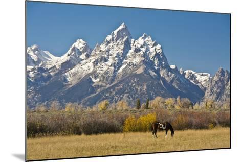 Horse and Grand Tetons, Moose Head Ranch, Grand Teton National Park, Wyoming, USA-Michel Hersen-Mounted Photographic Print
