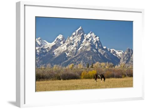 Horse and Grand Tetons, Moose Head Ranch, Grand Teton National Park, Wyoming, USA-Michel Hersen-Framed Art Print