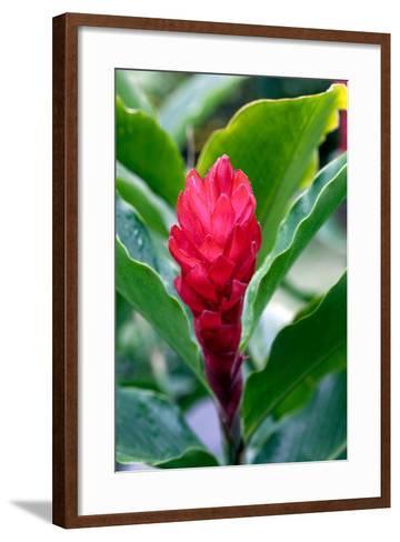 Red Flowering Bromeliad, Costa Rica-Susan Degginger-Framed Art Print