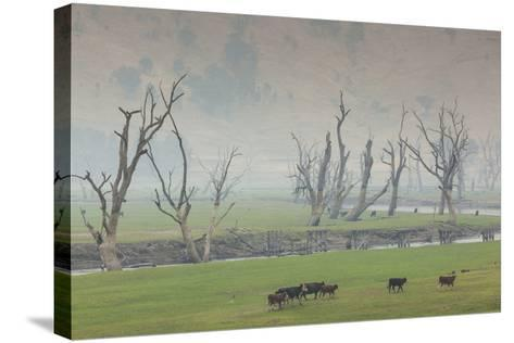 Australia, Victoria, Huon, Lake Hume with Forest Fire Smoke-Walter Bibikow-Stretched Canvas Print