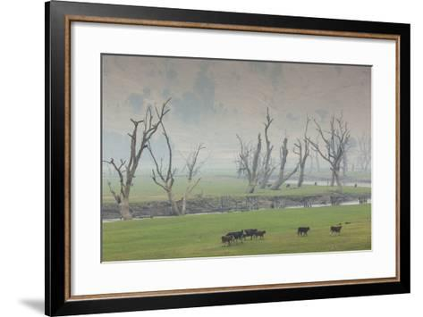 Australia, Victoria, Huon, Lake Hume with Forest Fire Smoke-Walter Bibikow-Framed Art Print