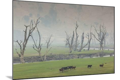 Australia, Victoria, Huon, Lake Hume with Forest Fire Smoke-Walter Bibikow-Mounted Photographic Print