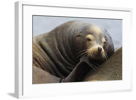California Sea Lion Resting-Ken Archer-Framed Art Print