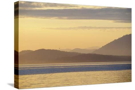 Canada, B.C, Sidney Island. Layered Yellow Islands with Bird Flying-Kevin Oke-Stretched Canvas Print
