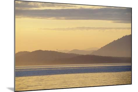 Canada, B.C, Sidney Island. Layered Yellow Islands with Bird Flying-Kevin Oke-Mounted Photographic Print