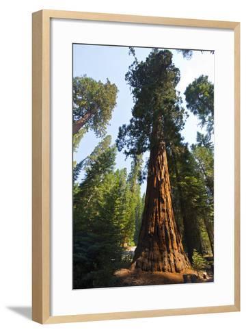 California, Yosemite National Park, Mariposa Grove of Giant Sequoia, the Colombia-Bernard Friel-Framed Art Print