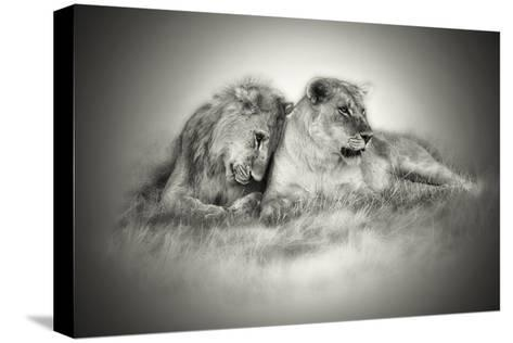 Lioness and Son Sitting and Nuzzling in Botswana Grassland, Africa-Sheila Haddad-Stretched Canvas Print