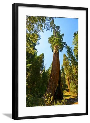 California, Sequoia, Kings Canyon National Park, General Grant Tree-Bernard Friel-Framed Art Print