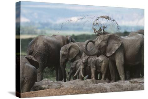 South Africa, Addo Elephant National Park, Elephant in the Mud at Water Hole-Paul Souders-Stretched Canvas Print