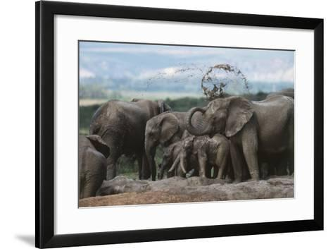 South Africa, Addo Elephant National Park, Elephant in the Mud at Water Hole-Paul Souders-Framed Art Print