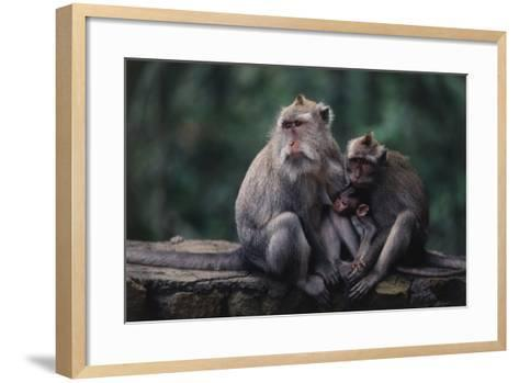 Indonesia, Bali, Ubud, Long Tailed Macaque in Monkey Forest Sanctuary-Paul Souders-Framed Art Print