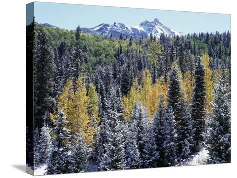 Colorado, San Juan Mts, First Snow and Fall Colors of the Forest-Christopher Talbot Frank-Stretched Canvas Print