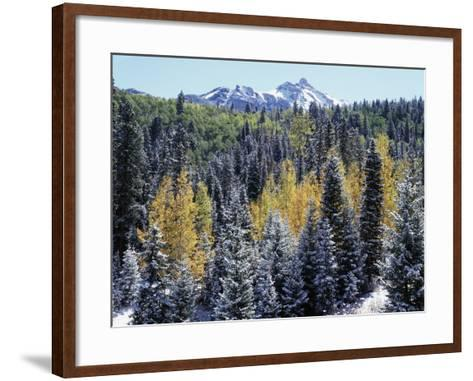 Colorado, San Juan Mts, First Snow and Fall Colors of the Forest-Christopher Talbot Frank-Framed Art Print
