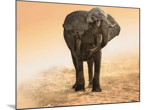 Artistic Rendition Elephant in Dust and Sunglow-Sheila Haddad-Mounted Photographic Print