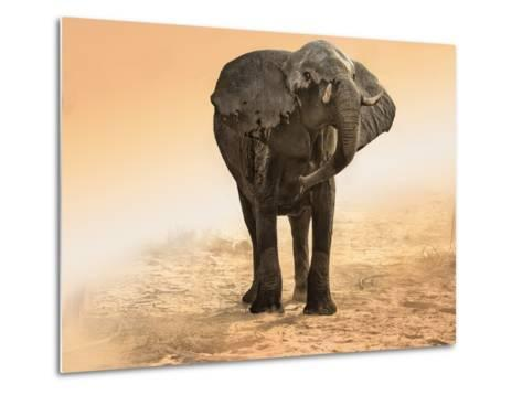 Artistic Rendition Elephant in Dust and Sunglow-Sheila Haddad-Metal Print