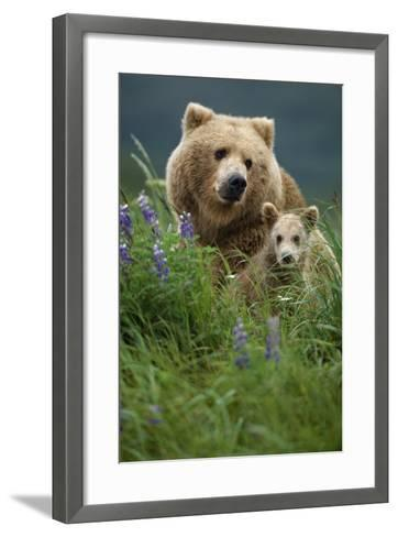 Sow Grizzly and Cubs in Grass Hallo Bay Katmai Np Alaska-Design Pics Inc-Framed Art Print
