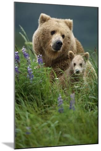 Sow Grizzly and Cubs in Grass Hallo Bay Katmai Np Alaska-Design Pics Inc-Mounted Photographic Print