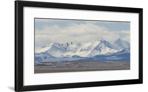 Birds Fly Near the Front Range of the Rocky Mountains in Montana-Michael Melford-Framed Art Print
