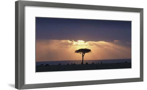 An Acacia Tree and Wildebeest under a Sunset; Kenya, Africa-Design Pics Inc-Framed Art Print