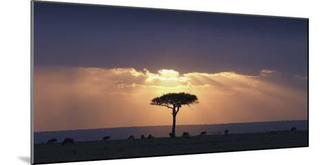 An Acacia Tree and Wildebeest under a Sunset; Kenya, Africa-Design Pics Inc-Mounted Photographic Print