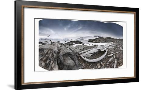 Whalebones on the Beach at an Old Whaling Station-Jim Richardson-Framed Art Print