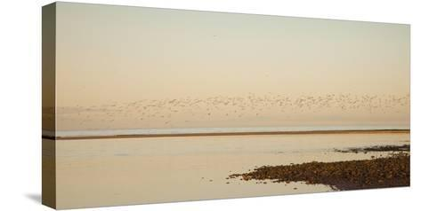 Shore, Alnmouth, Northumberland, England-Design Pics Inc-Stretched Canvas Print