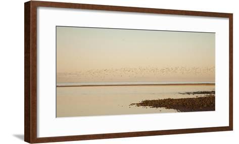 Shore, Alnmouth, Northumberland, England-Design Pics Inc-Framed Art Print