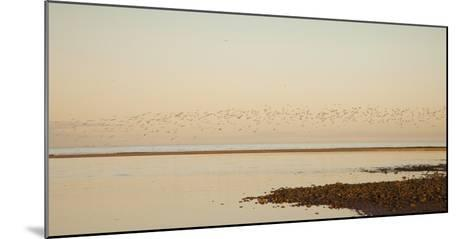Shore, Alnmouth, Northumberland, England-Design Pics Inc-Mounted Photographic Print