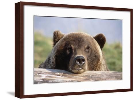 Brown Bear Resting on Log Alaska Wildlife Converation Center Summer Sc Alaska-Design Pics Inc-Framed Art Print