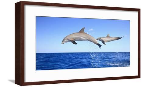 Roatan-Design Pics Inc-Framed Art Print