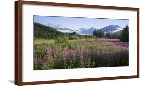 Field of Fireweed with Coast Mountains and Mendenall Glacier-Design Pics Inc-Framed Art Print