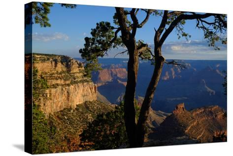 Trees on the Edge of the South Rim of the Grand Canyon-Paul Damien-Stretched Canvas Print