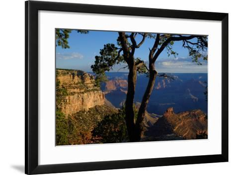 Trees on the Edge of the South Rim of the Grand Canyon-Paul Damien-Framed Art Print