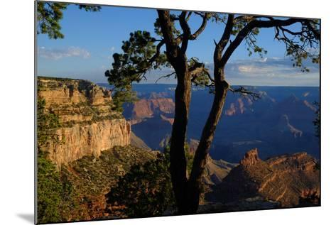 Trees on the Edge of the South Rim of the Grand Canyon-Paul Damien-Mounted Photographic Print