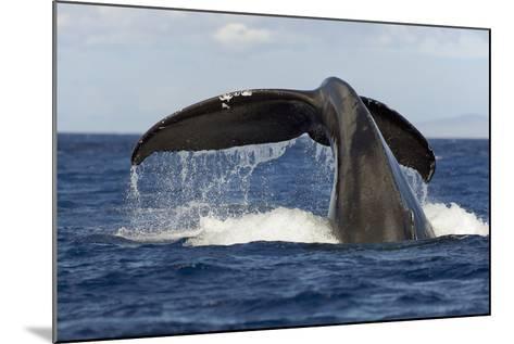 Hawaii, Lanai, Tail of a Humpback Whale (Megaptera Novaeangliae)-Design Pics Inc-Mounted Photographic Print
