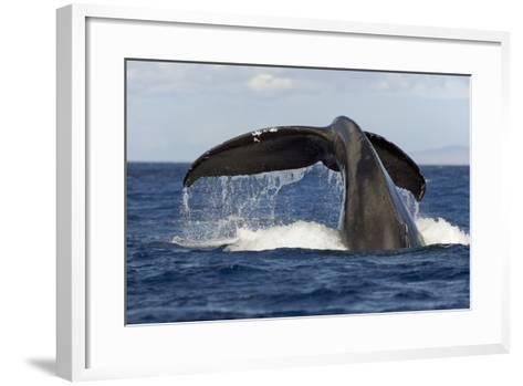 Hawaii, Lanai, Tail of a Humpback Whale (Megaptera Novaeangliae)-Design Pics Inc-Framed Art Print