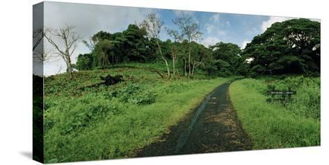 Dateline Drive on Taveuni Island-Macduff Everton-Stretched Canvas Print