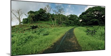 Dateline Drive on Taveuni Island-Macduff Everton-Mounted Photographic Print